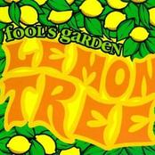 Lemon Tree [single]