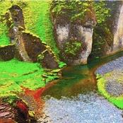 Rainforest (Deluxe Edition)