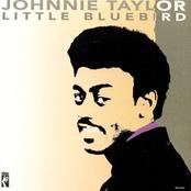 Johnny Taylor: Little Bluebird
