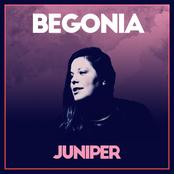 Begonia: Juniper