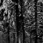 Abstrakter Wald