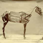 Chadwick Stokes: The Horse Comanche
