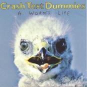 Crash Test Dummies: A Worm's Life