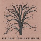 Musings Of A Telescopic Tree