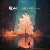 Ripe: Joy in the Wild Unknown