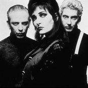 Siouxsie and the Banshees 21bfb6c57c1f44ac9bc5031da0a2a3f1