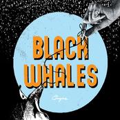 Black Whales: Origins