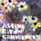 Active Bird Community