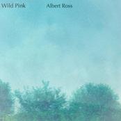 Wild Pink: Albert Ross (Acoustic Version)