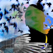 CJ Fly: Bird