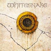 Thumbnail for Whitesnake