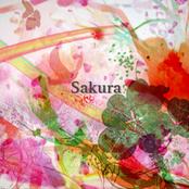 Sakura ジャケット写真