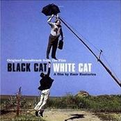 Black Cat White Cat