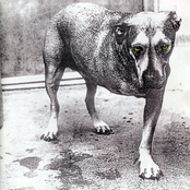 Grind by Alice In Chains