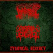 Zygotical Ecstacy