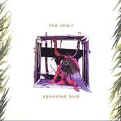 The Choir: Speckled Bird