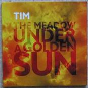 The Meadow Under a Golden Sun