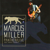 Panther/(live)