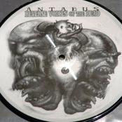 Necrophagia/Antaeus Split