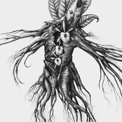 IV: Mandragora