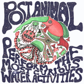 Post Animal: Post Animal Perform the Most Curious Water Activities