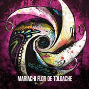 Flor De Toloache: Mariachi Flor De Toloache