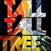 Tall Tall Trees: moment