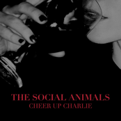 Social Animals: Cheer Up Charlie