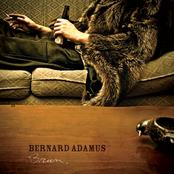Bernard Adamus: Brun