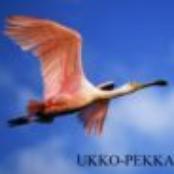 Avatar for Ukko-Pekka