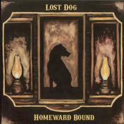 Lost Dog Street Band: Homeward Bound