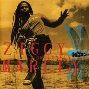 Ziggy Marley: Dragonfly