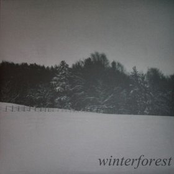 Winterforest Split