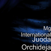 MG INTERNATIONAL - JUODA ORCHIDEJA