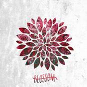 Blossom: Blossom