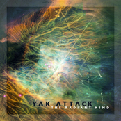 Yak Attack: The Radiant Kind