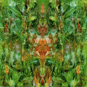 Emerald Aether: Shape Shifting