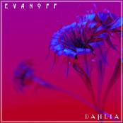Evanoff: Dahlia