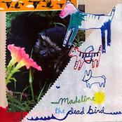 The Dead Bird Split