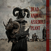 Dead Animal Assembly Plant: Bring Out The Dead