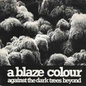 Against The Dark Trees Beyond