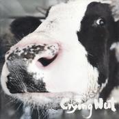 OK 목장의 젖소 Milk Cattle at the OK Corral