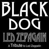 Black Dog - a Tribute to Led Zeppelin