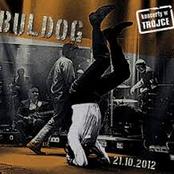 Koncerty w Trójce - Buldog