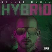 Collie Buddz: Hybrid