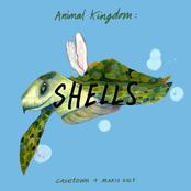 Animal Kingdom: Shells