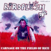 Birdflesh: Carnage on the fields of rice