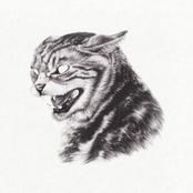 Great Dane: Beta Cat
