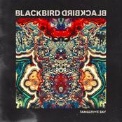 Blackbird Blackbird: Tangerine Sky