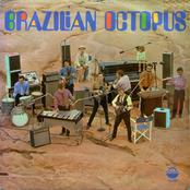 Brazilian Octopus